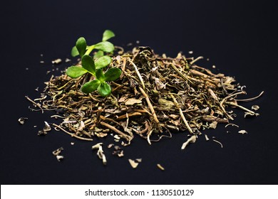 Dried bacopa medical herb, known from Ayurveda as Brahmi - isolated on a dark background