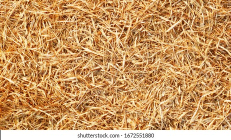 dried bamboo leaf background. brown leaf