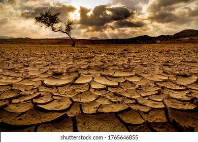 Dried up base of a dam in Ras al khaimah, one tree stands tall. Concept shot for scarcity, famine