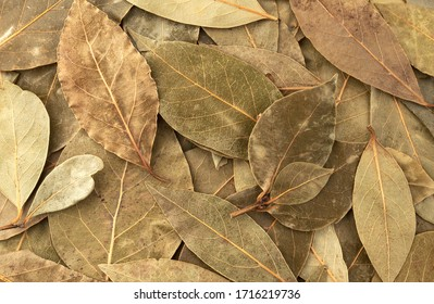 Dried bay leaf background close up, top view texture