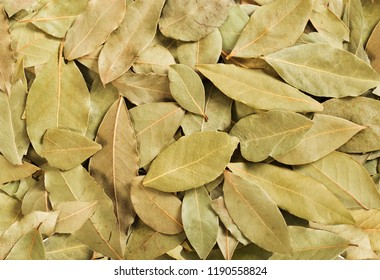 Dried bay leaves stack isolated on white. Laurel leaves heap.