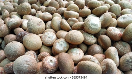 Dried Betel Nut or Areca Nut background