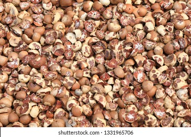 Dried betel nut (Areca catechu) is the fruit of the areca palm (Areca catechu), Usually for chewing, a few slices of the nut are wrapped in a betel leaf along with calcium hydroxide (slaked lime)
