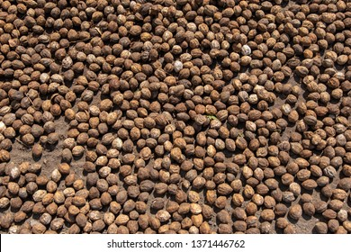 Dried betel nut on the floor. The Betel nut with shell is doing half were arranged to drying by solar. Betel nut On the tray there is a variety of backgrounds.