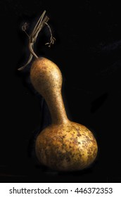 Dried bottle gourd on black background shot in a studio with side lighting to show texture.