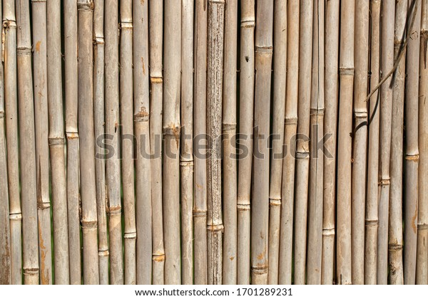 Dried brown bamboo as background
