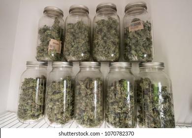 Dried Cannabis in Mason Jar