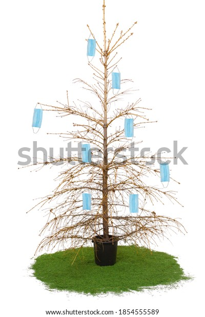 Dried Christmas tree decorated with medical masks. Isolated on white background. Pandemic.