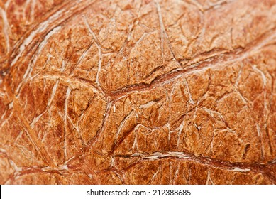 Dried Coconut scull texture
