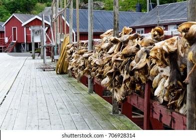 Dried Cod in Nusfjord, Lofoten islands, Norway