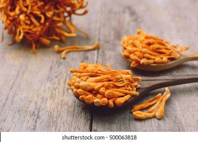 dried cordyceps militaris mushroom on wooden spoon.