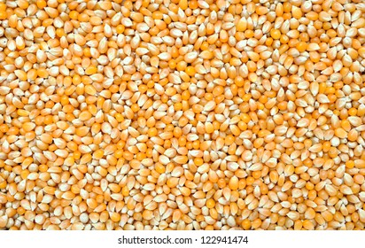 dried corn for background uses