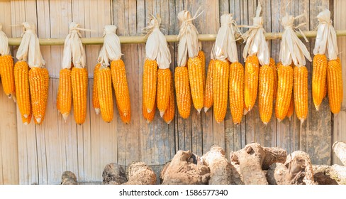 The dried corn hangs on the railings and walls made of bamboo background