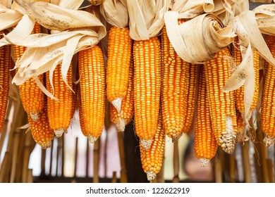 Dried corn on cobs hung on the beam