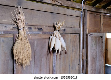 dried corn and rice hanging on a wooden wall.