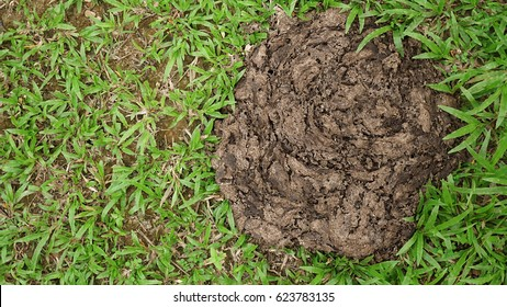 Dried cow dung on the green grass, Compost fertilizer shit for the environment, Top view texture background