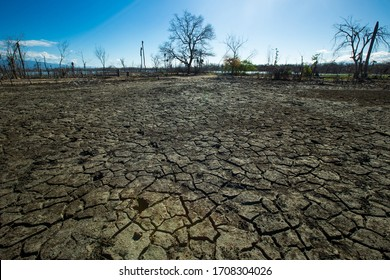 Dried cracked earth aridity ground of lake bottom pattern with dry trees and blue sky on background Enriquillo lake Dominican republic