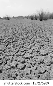 Dried cracked earth and global warming concept