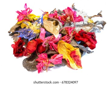 dried crumpled leaves money tree (Crassula) and withered flowers geraniums , photo manipulation
