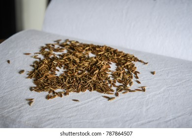 Dried Cumin Seeds Also Know as Caraway, jira or jeera Its seeds are used in the cuisines of many different cultures