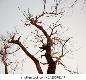 Dried and dead tree parts isolated natural object photo
