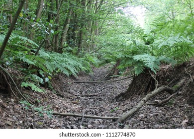 Dried up ditch in a green forest.