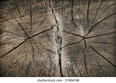 Dried double-tree cut texture