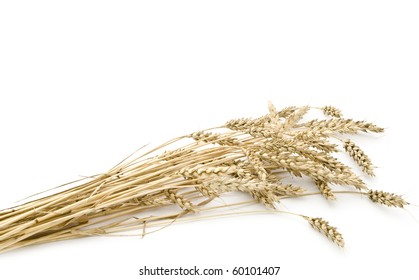 Dried ears of wheat on a white background.