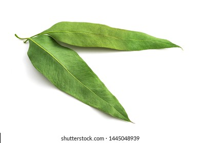 Dried eucalyptus leaves isolated on white background