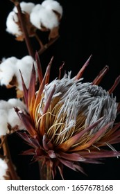 dried exotic flower Protea and cotton flowers on black background close up . poster. minimal floral concept