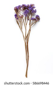 Dried Field Flower isolated on White Background with Real Shadow. Top View Image of Wild Flowers. Close up with Space for Text.