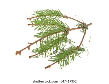Dried fir needles after christmas, isolated on a white background