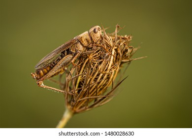 Dried flower and hopper. Detailed photo of this surreal view. Clean green background.
