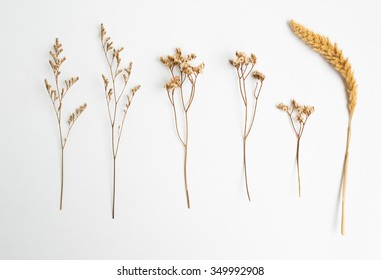 Dried flower on old white background.