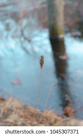dried flower on the river's edge