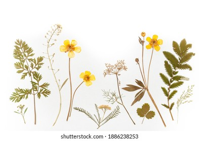 dried flowers composition. herbarium. isolated on white background