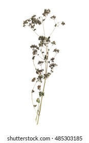 dried flowers, dry grass on a white background, tutsan, hypericum,marjoram, oregano