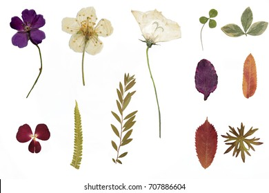 Dried flowers and herbarium isolated on a white background