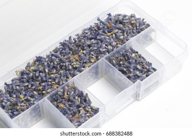 Dried flowers of lavender. The cells of the container are filled with dried lavender inflorescences in random order. On a white background.
