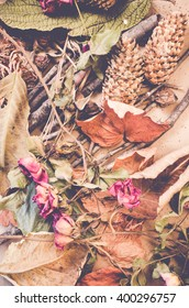 dried flowers leaves and twigs - dried nature still life