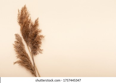 Dried flowers. Nature mockup background. Autumn flat lay composition.