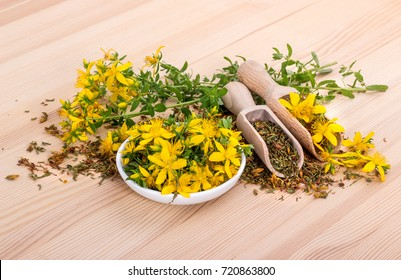 dried and fresh, flowering St. John's wort