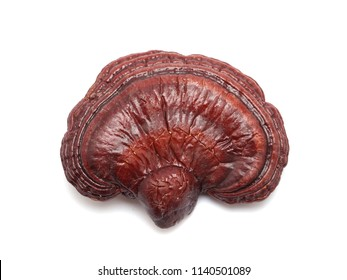 Dried Ganoderma Lucidum Mushroom isolated on white background.Ling Zhi Mushroom.
