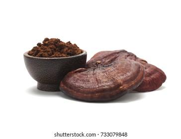 Dried Ganoderma Lucidum Mushroom with Ling Zhi powder isolated on white background.