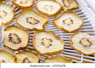 Dried golden kiwi fruit slices on a plastic food dehydrator with shallow depth of field