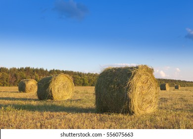 Dried grass - hay, Packed in roll