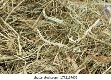 herbe séchée, paille de foin