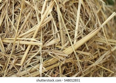 dried grass roof and background on the sun shade