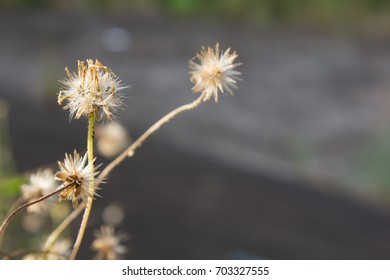 Dried grass, soft focus, warm fall color. Blurred grass in sunset.
