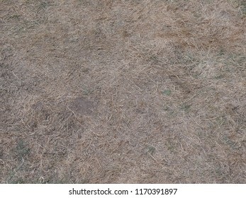 dried grass and some weeds in a meadow after a long time of drought. In addition, the plants were still trampled.
